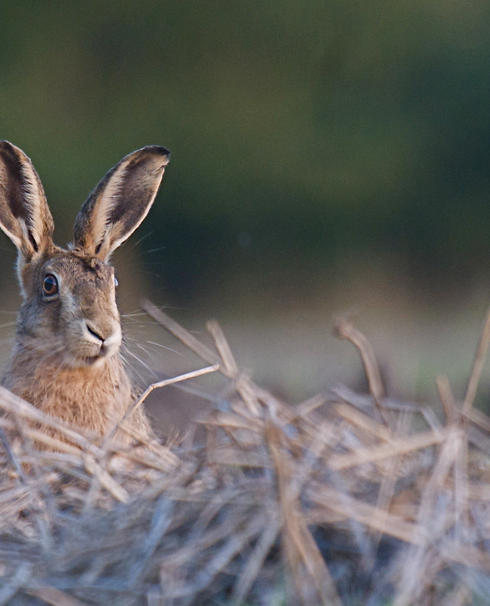Everything You Need to Know About the Cotswold Hare Trail