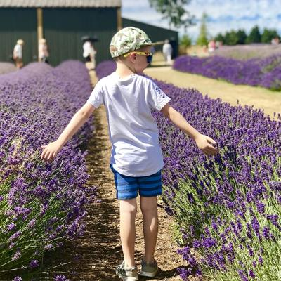 this is a photo of a toddler playing in a field of lavender